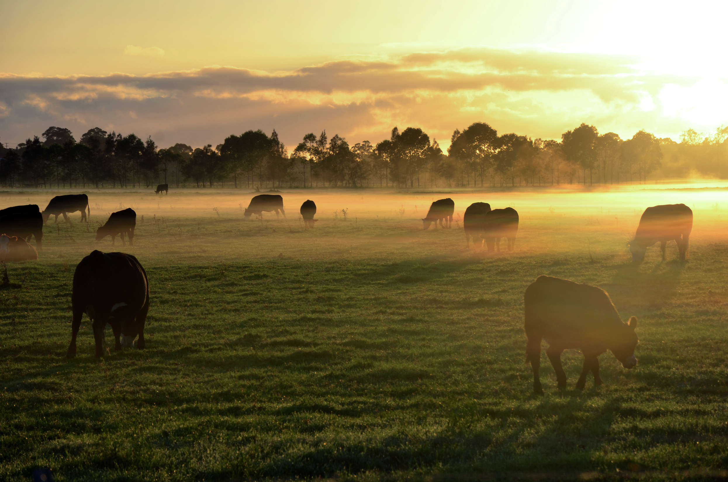 Most farm advisory service delivery will continue to be about how to stay in the industry and be more sustainable and profitable.