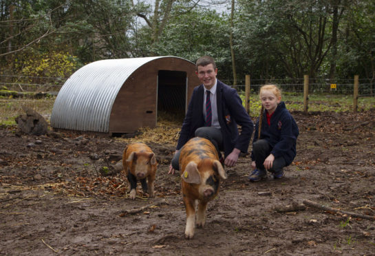 Lathallan School pupils Claudia Green, 7, and Fraser Dandie, 16, get to know the new piglets at the school.