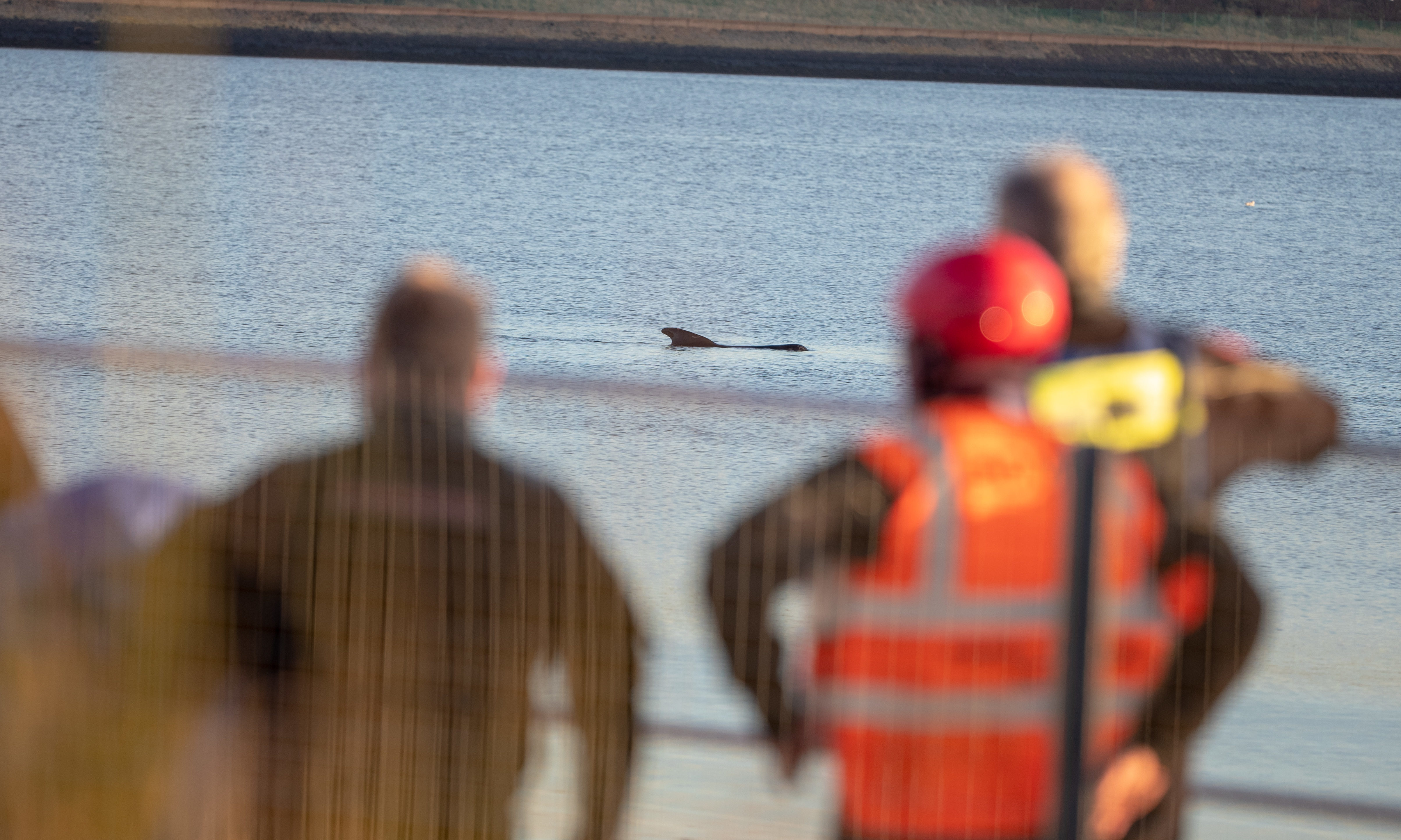 Rescuers watch the whales in the Firth near Culross.