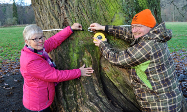 Judy Dowling and Noel Fojut take the Murthly Castle tree's vital statistics