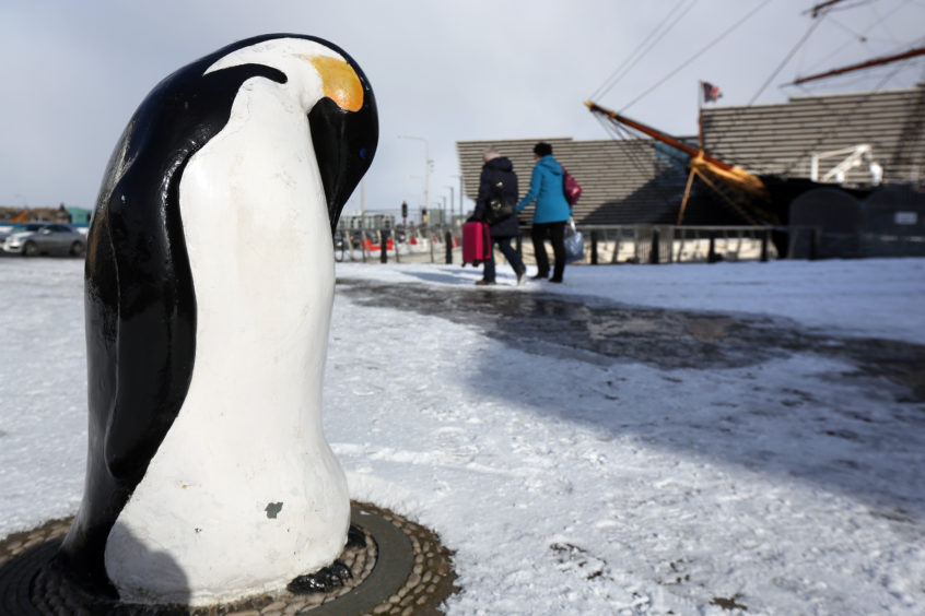 Penguins must have felt at home in the cold. Kris Miller/DCT Media