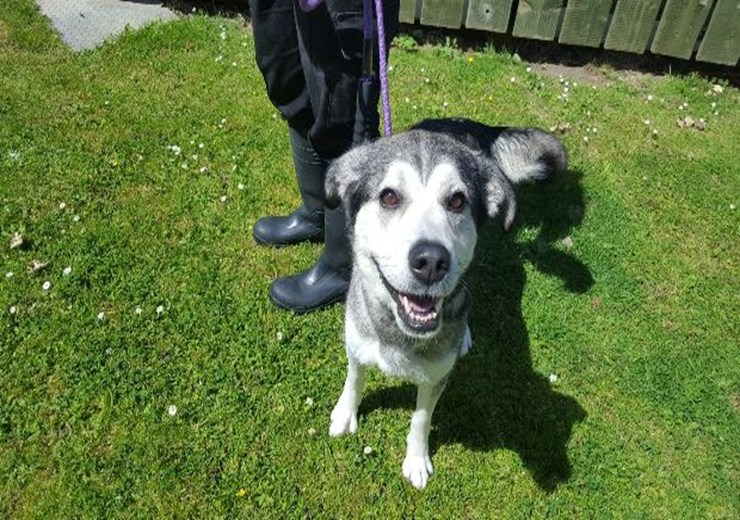 Five-year-old Rogue is currently at the SSPCA centre in Dundee waiting to be re-homed.