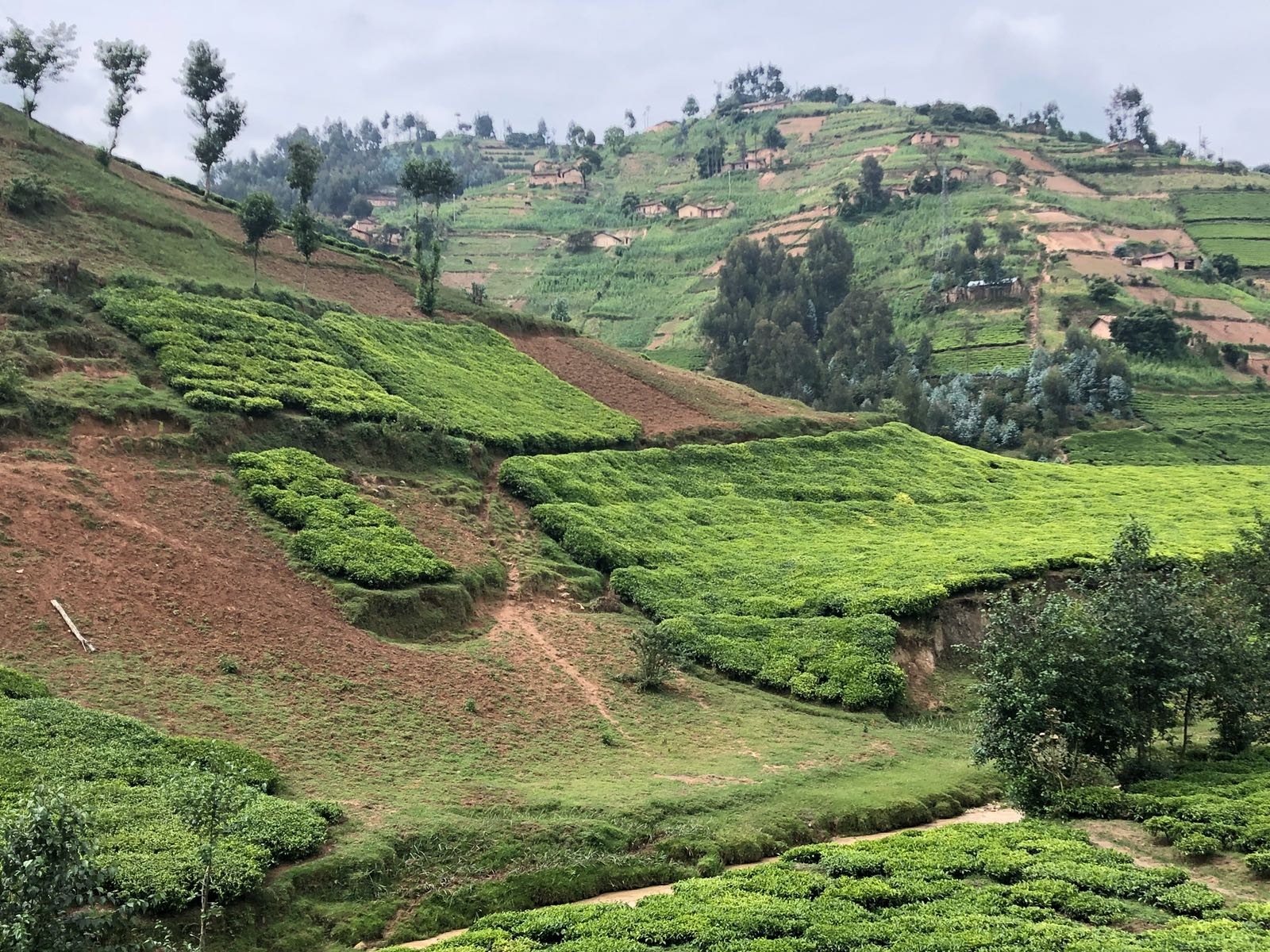 Rwanda – the land of 1,000 hills – makes maximum use of its rich volcanic soils to bolster its agricultural sector.