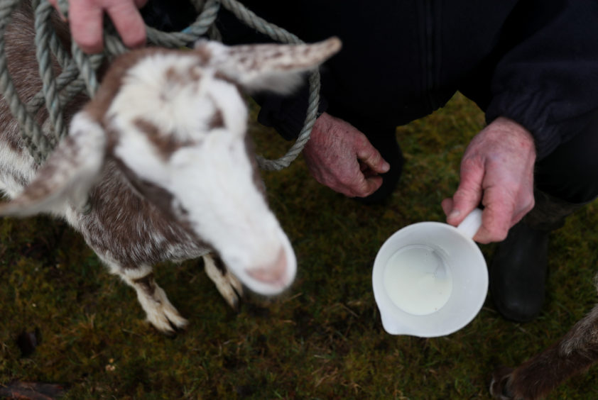 Milk is displayed during the 'Milking of the Goat' festival on Spink Hill, Co. Offaly. The festival celebrates Imbolc which marks the beginning of spring and is one of the four Celtic seasonal festivals.