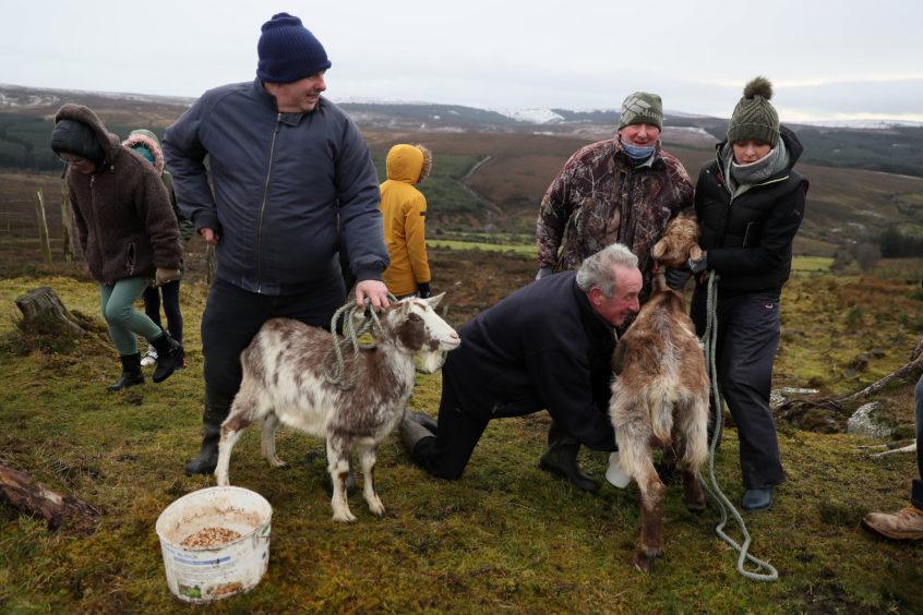 John Rigney, chairman of the Slieve Bloom Association, milks a goat during the 'Milking of the Goat' festival on Spink Hill, Co. Offaly. The festival celebrates Imbolc which marks the beginning of spring and is one of the four Celtic seasonal festivals.