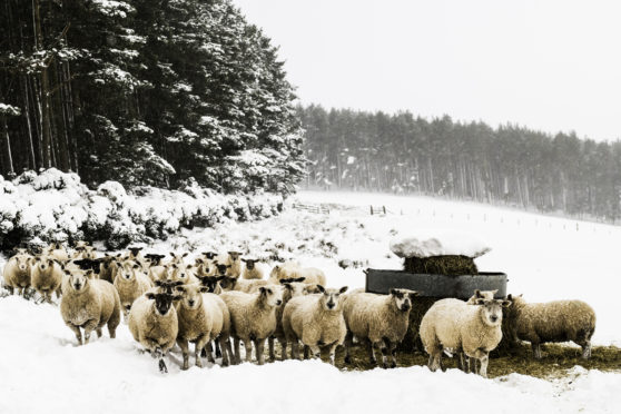 Scotland's sheep sector would be severely impacted if the UK fails to agree a withdrawal deal with Europe.
