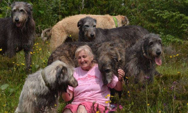 Fran Barnbrook with Tink (over her shoulder) and some of her other Wolfhounds.