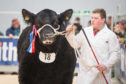 Ian Lockhead Anderson of Glassel Farms with the Aberdeen-Angus supreme champion at Stirling Bull Sales.