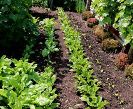 Salads in succession