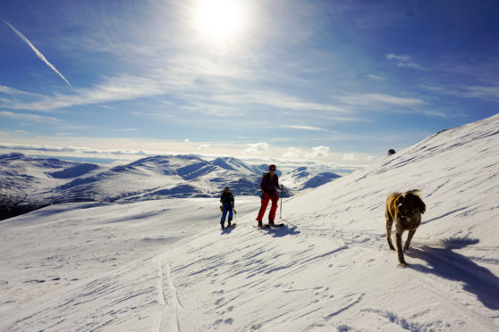 Ski touring across Scotland's wilderness is exhilarating for Philip Ebert and his friends. Here they are accompanied by his Brittany spaniel Rhuraidh.