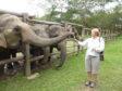 McGrouther feeding the elephants at Elephant Valley Thailand sanctuary.