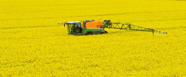 Glphosate is regarded as vital for oilseed rape production.