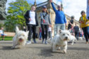 Last year's Westie Walk was such a success that it prompted a dog festival to be organised for this summer.