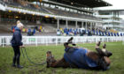 Racehorse Anibale Fly enjoys a roll on the ground during St Patrick's Thursday of the 2019 Cheltenham Festival at Cheltenham Racecourse.