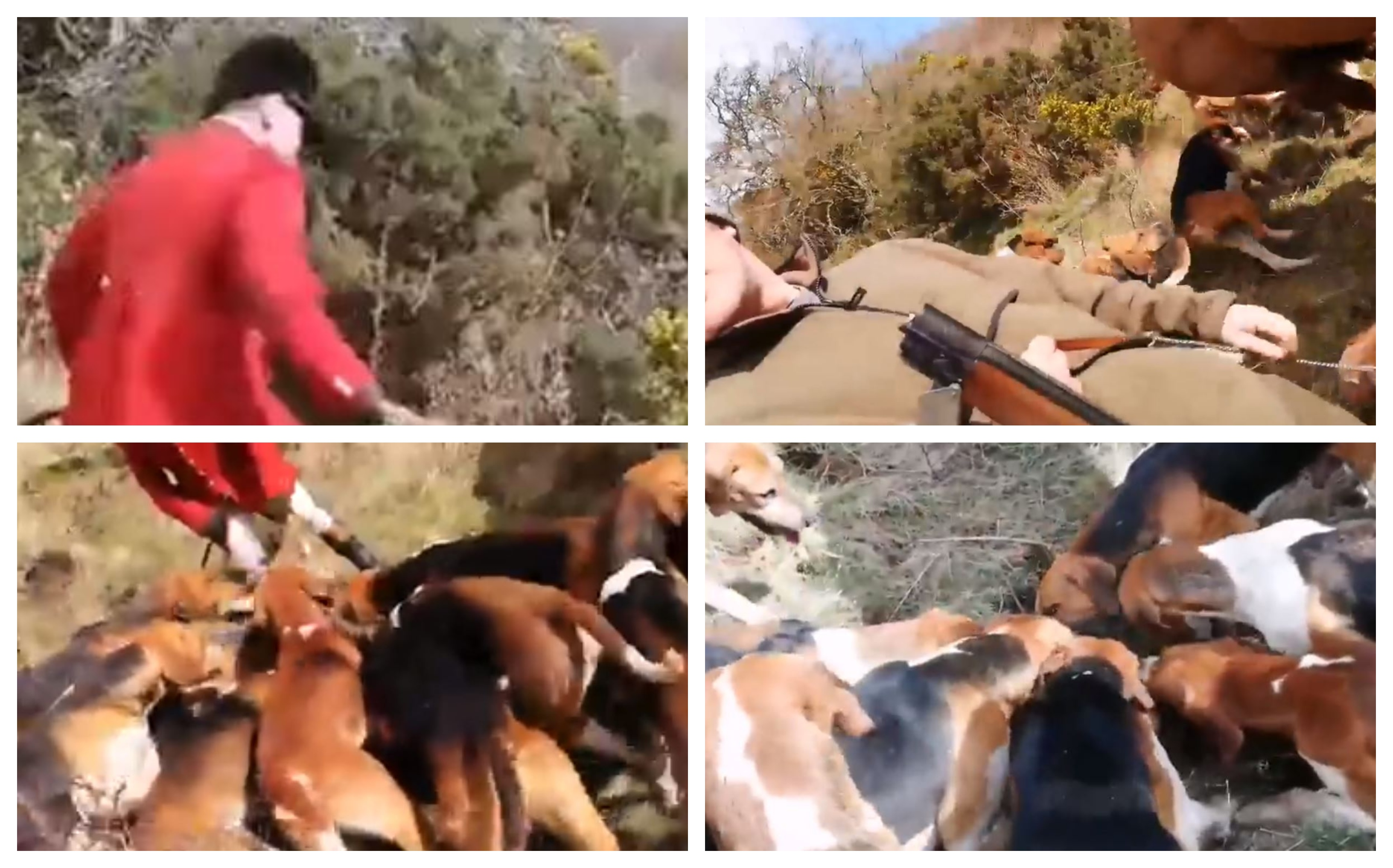 Footage of the recent fox killing in Fife was posted online by hunt saboteurs.
