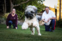 Michelle Bond and Murray Simpson are over-joyed to have Betty the Tibetan Terrier back