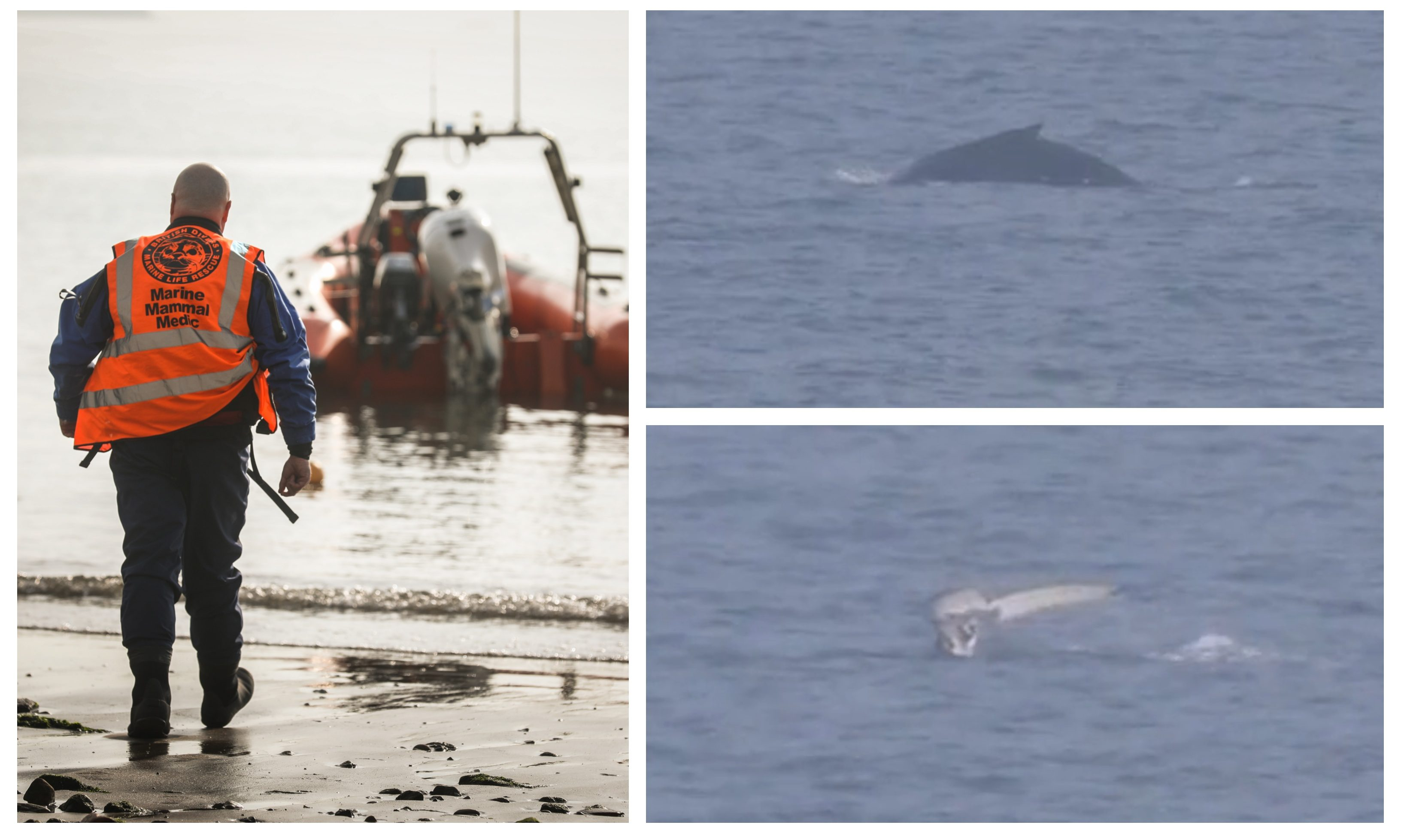 The humpback whale has been at the centre of a rescue effort.