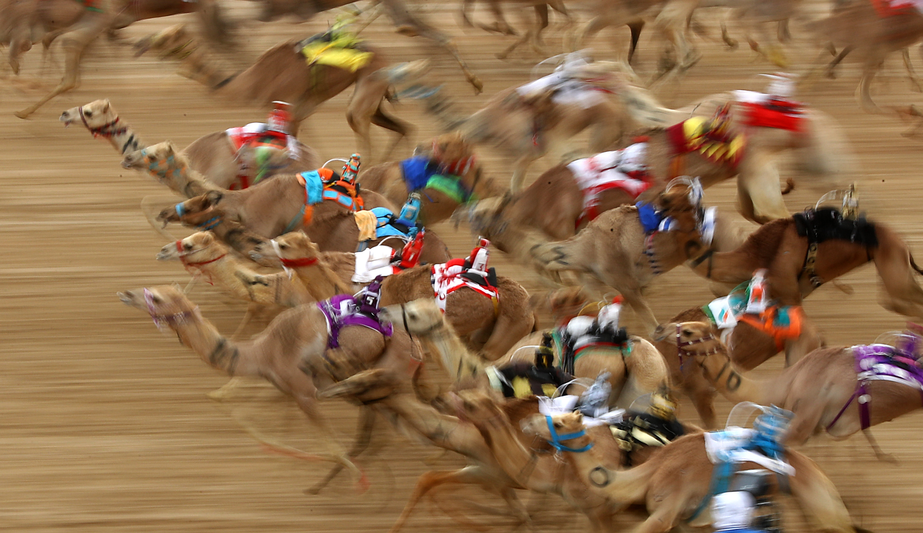 The festival promotes the traditional sport of camel racing within the region.
