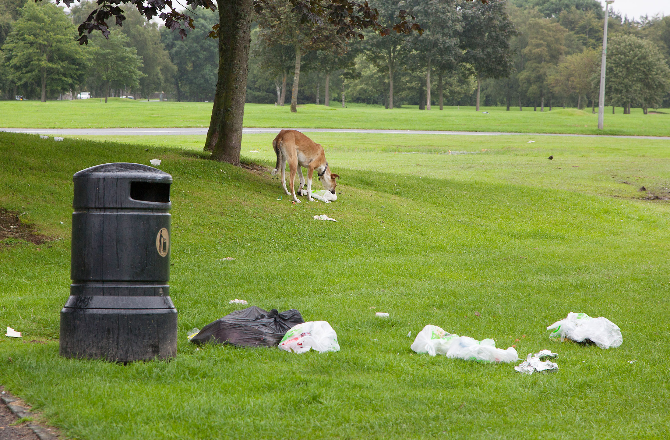 Travellers have left a trail of rubbish at camps throughout Angus, including Forfar.