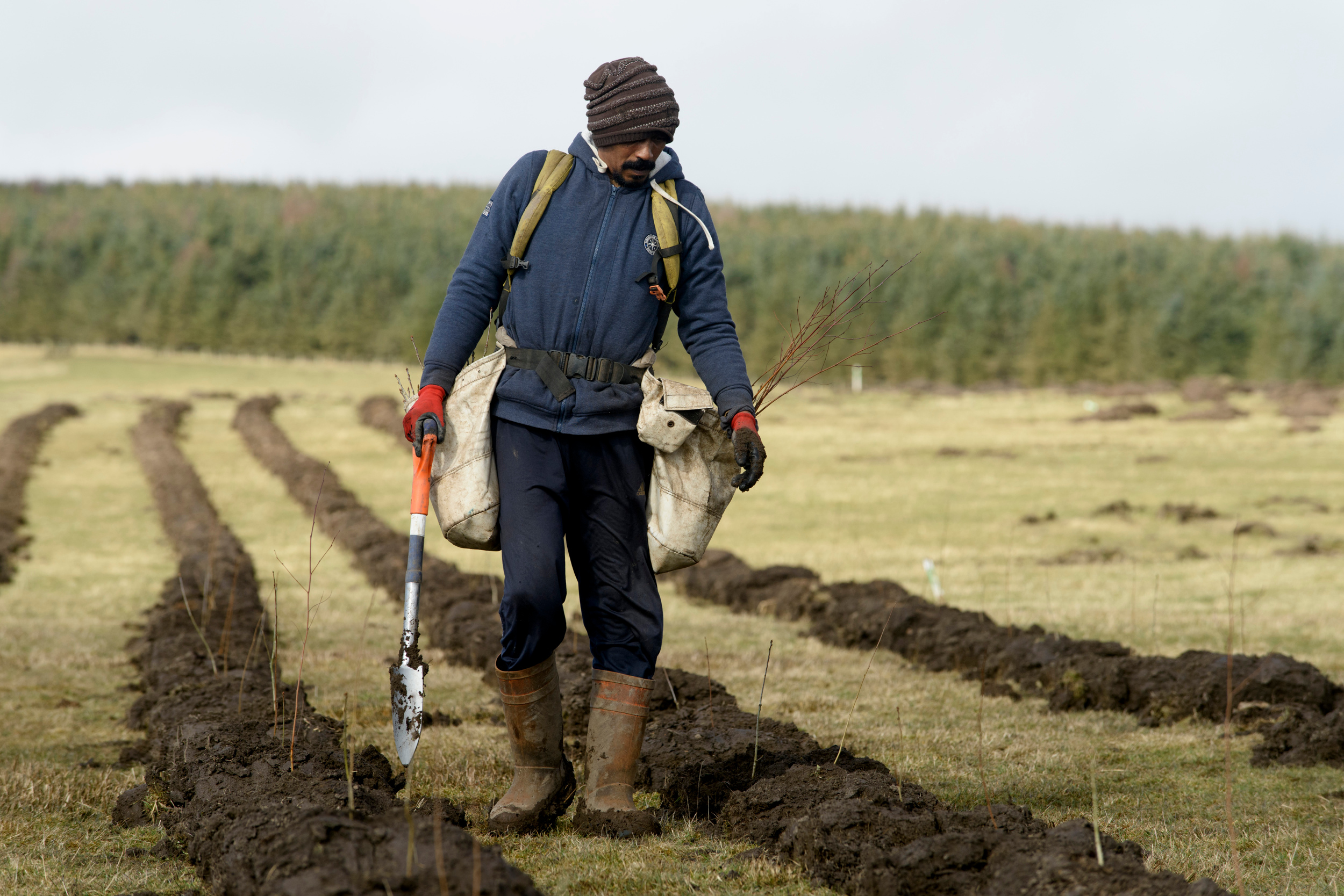 Tree planting is set to increase with ambitious targets for 18,000ha of afforestation per year.