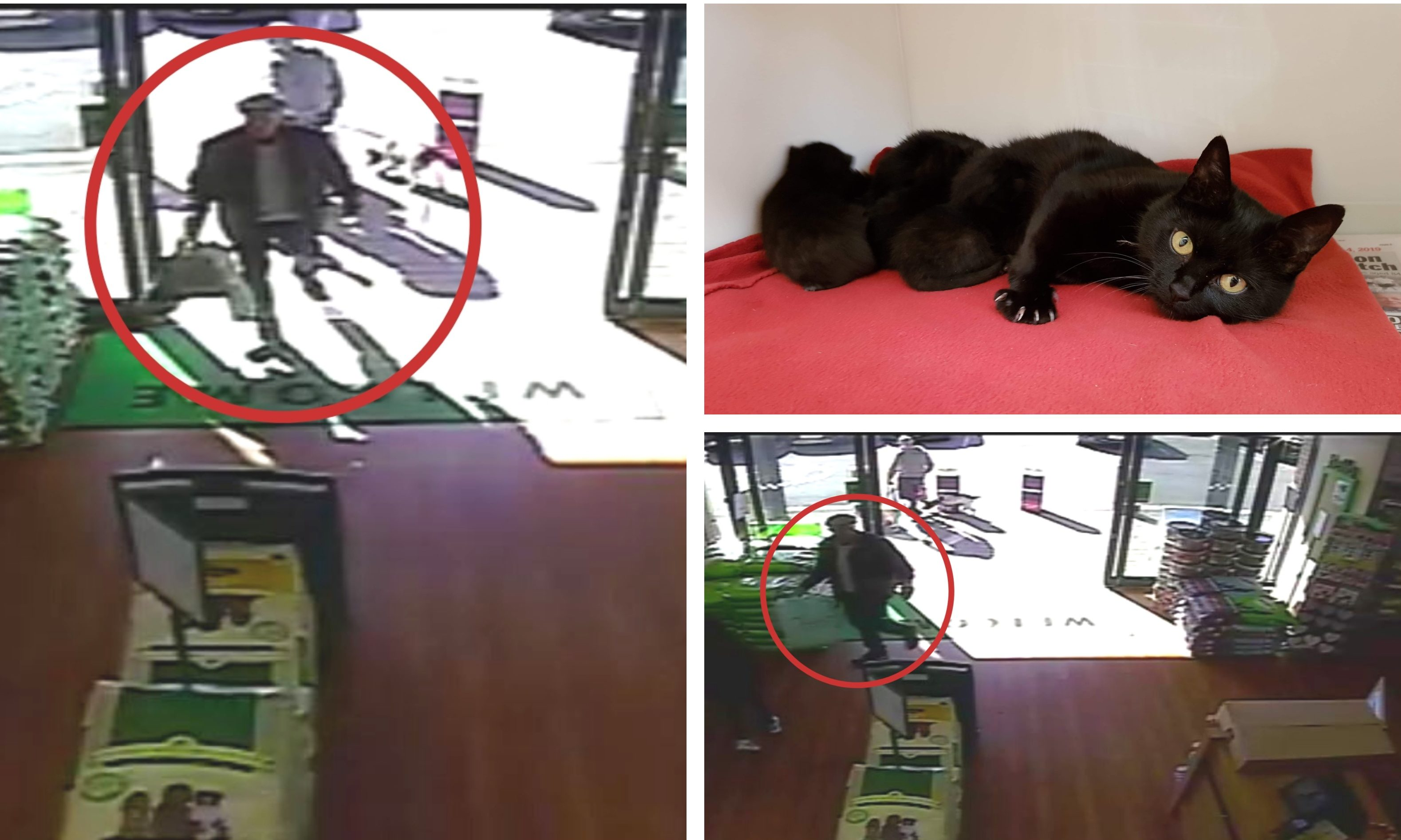The man was filmed abandoning the cat and her kittens at Pets at Home in Dunfermline.