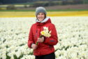 Grampian Growers, based in Montrose, have sold out of daffodils after their best harvest in 12 years.