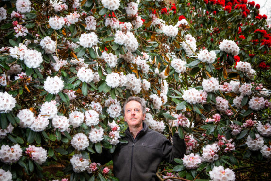 Ken with Rhodendron Taurus.