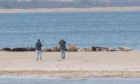 The photograph shared by Scotland's National Nature Reserves of two people too close to seals at Tentsmuir Point
