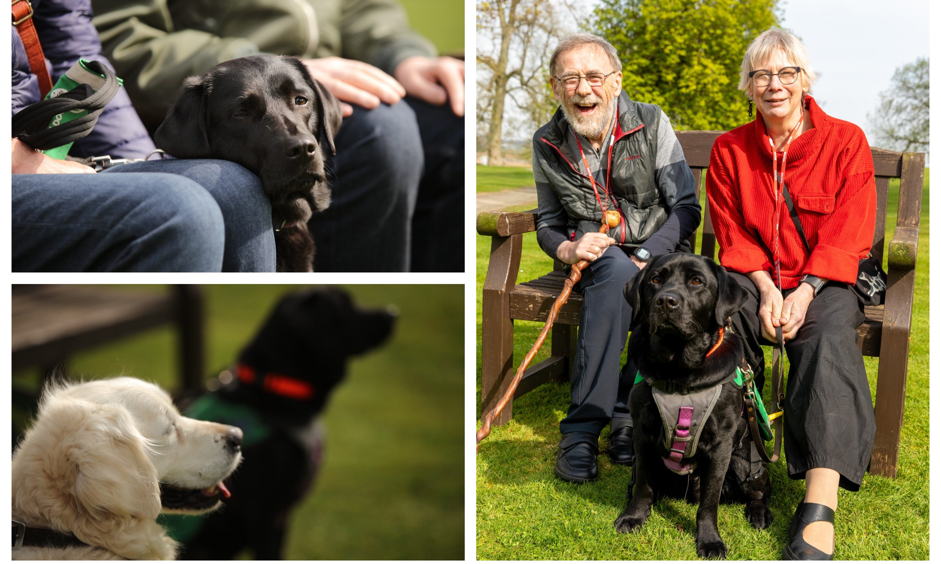 "The Dementia Dog project has celebrated the ""graduation"" of eight pooches."