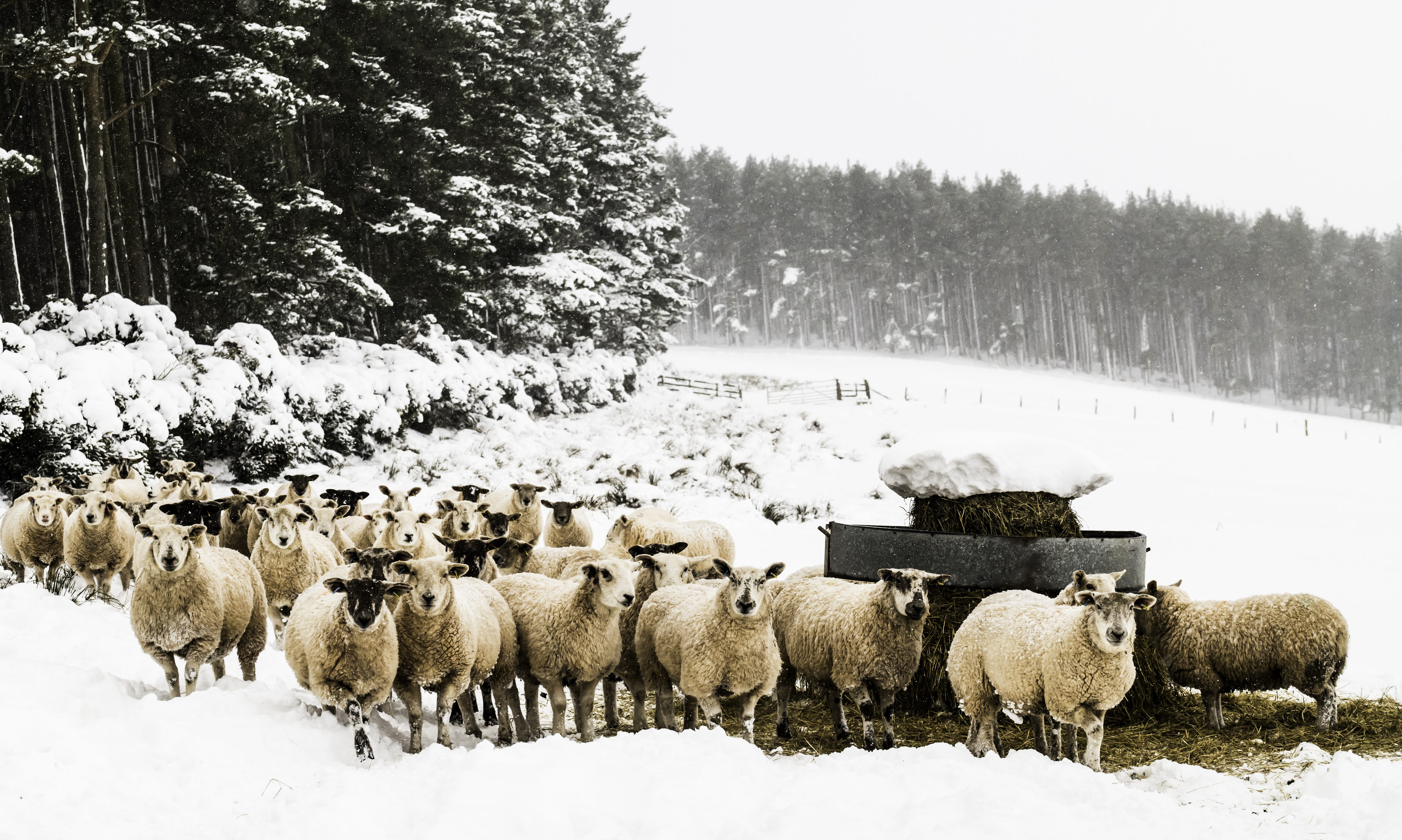 The 'beast from the east' took a heavy toll on farmers across the country.