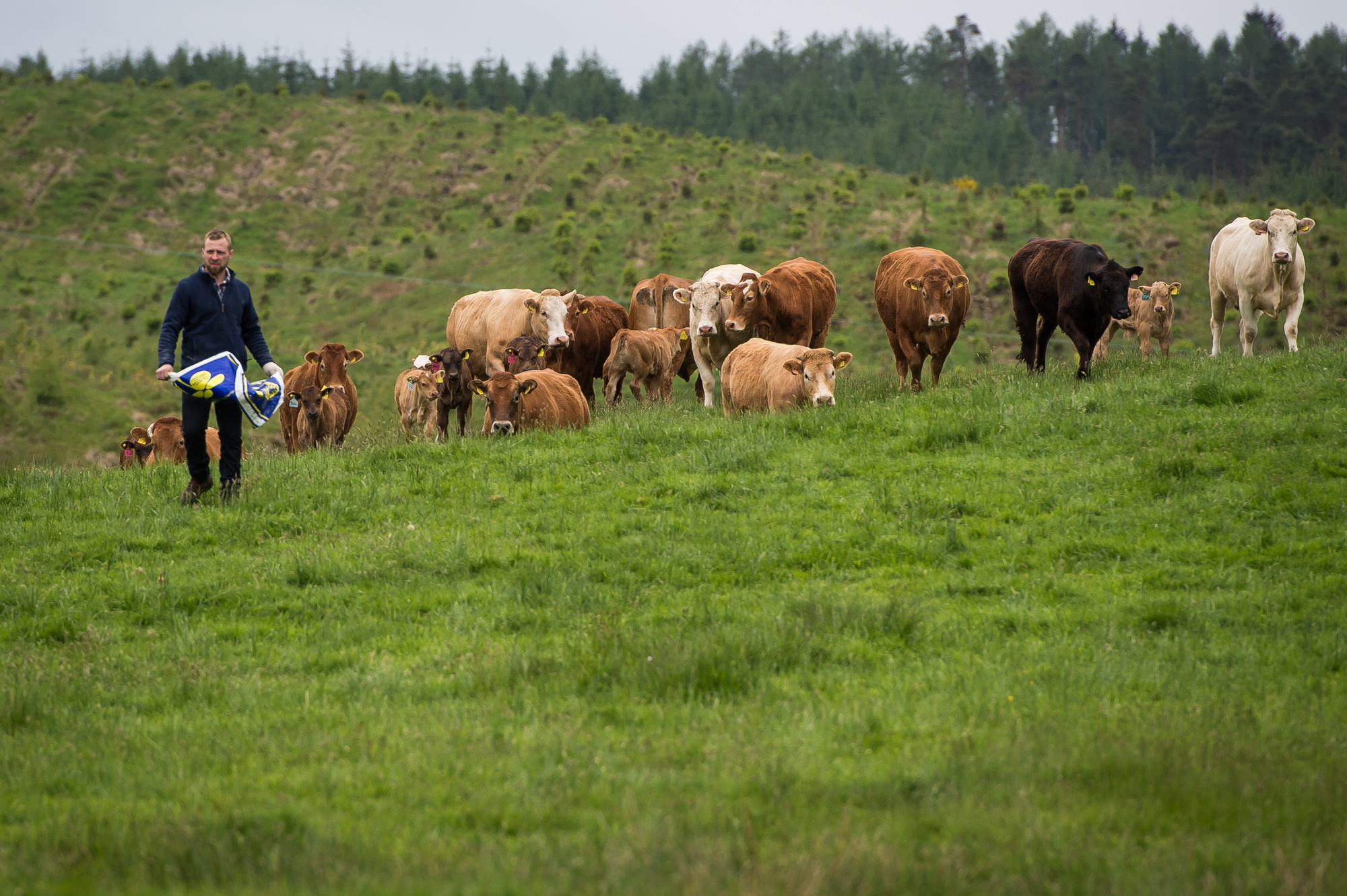 Callum Lindsay is just one of the ambitious farmers given land under a government scheme.