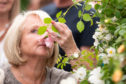 A visitor smells a rose as the doors open to the public at the RHS Chelsea Flower Show at the Royal Hospital Chelsea, London