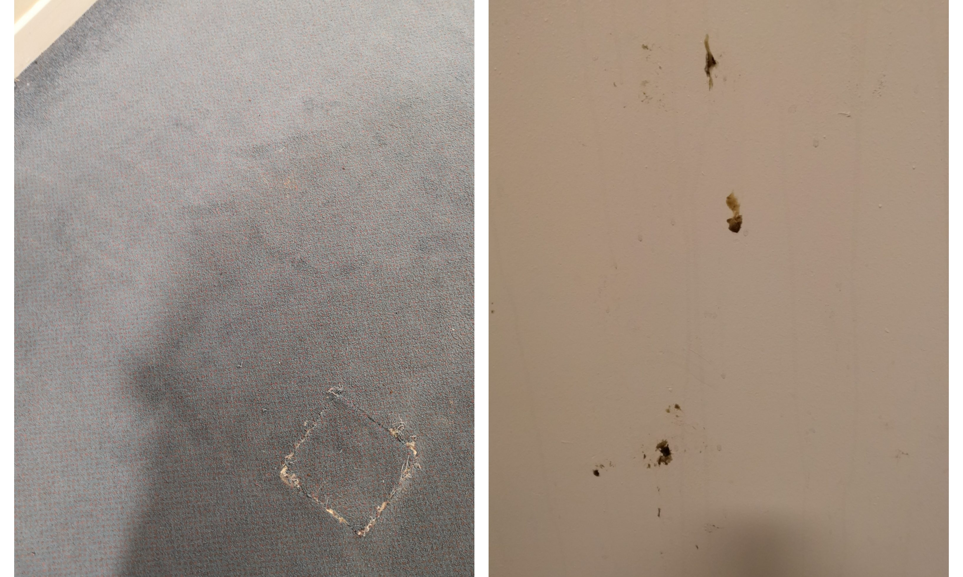 The carpet (l) and walls (r) have not been cleaned for months