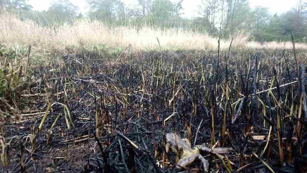 Wildlife such as frogs have been killed in recent fires