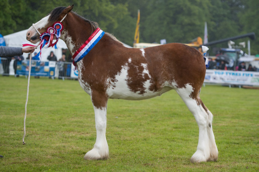 A Rain soaked Fife Show in Cupar   (