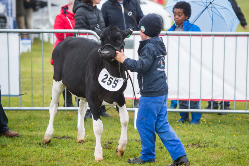 A Rain soaked Fife Show in Cupar