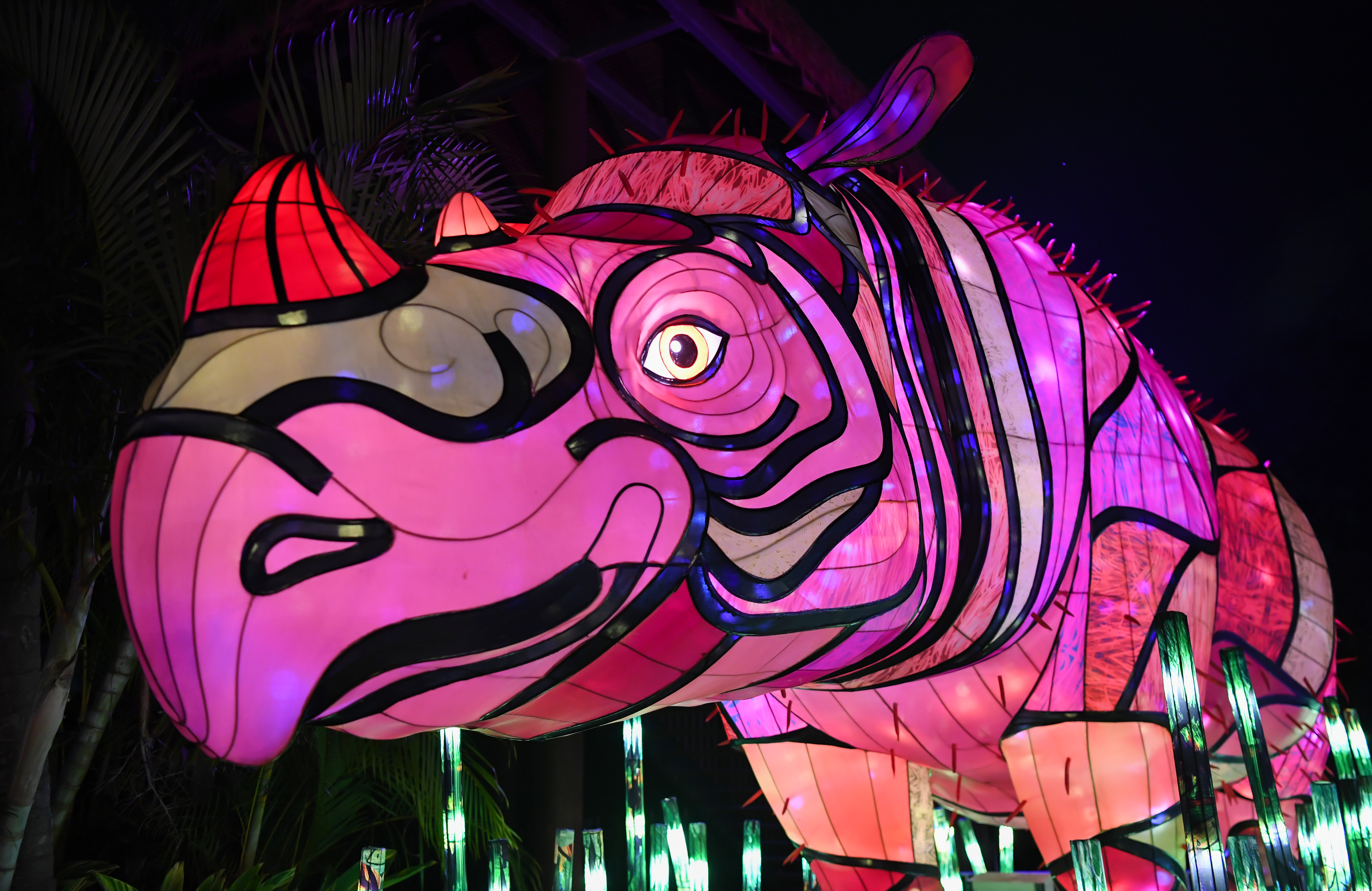 An illuminated lantern sculpture of a rhino during the media preview of Vivid Sydney at Taronga Zoo in Sydney, Australia.