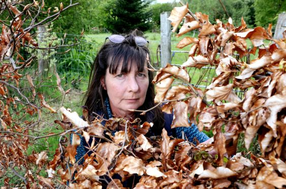 Fiona Grieve believes her hedge was deliberately poisoned