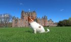 Glamis Castle's first doggie-friendly cinema night will tale place on June 1.