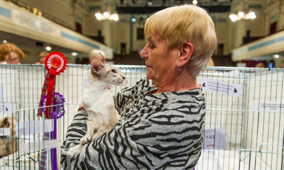 Joanne Geddes with her Red Pointed Siamese cat.