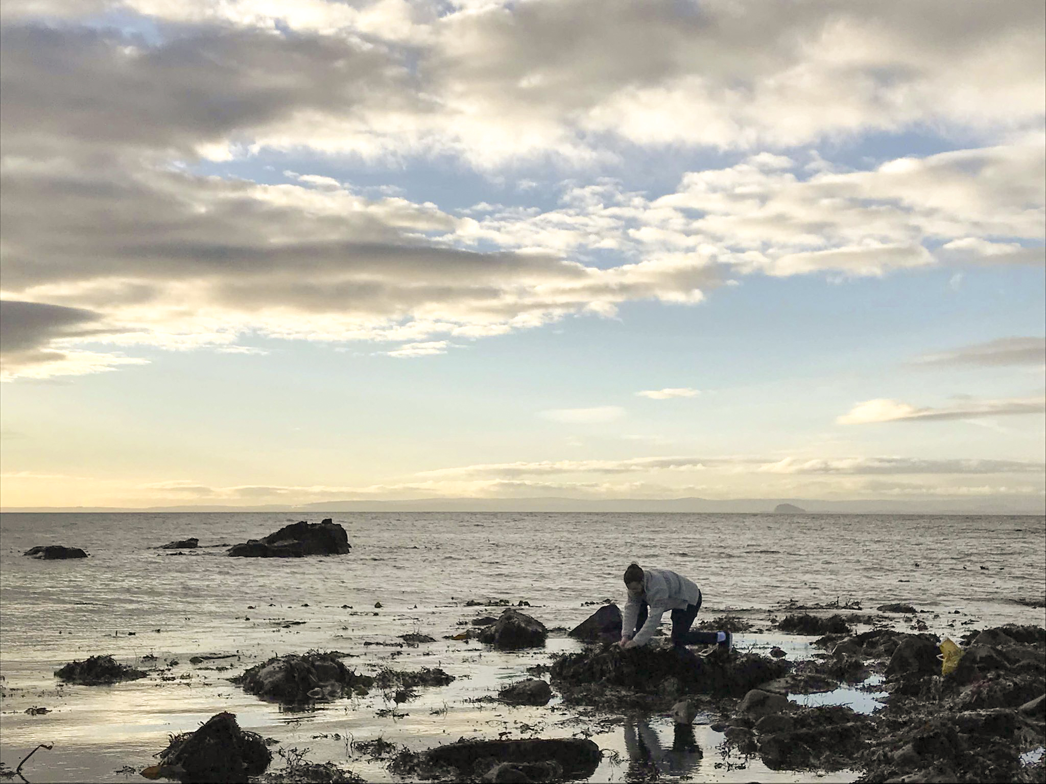 Michael Anderson collecting the kelp
