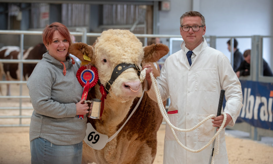 Champion Simmental Bull, Dunmore Iceman with owners David and Gillian Aitken.