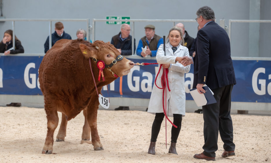 Sophie Harvey is congratulated after her bull Maraiscote Orson wins champion Limousin bull.