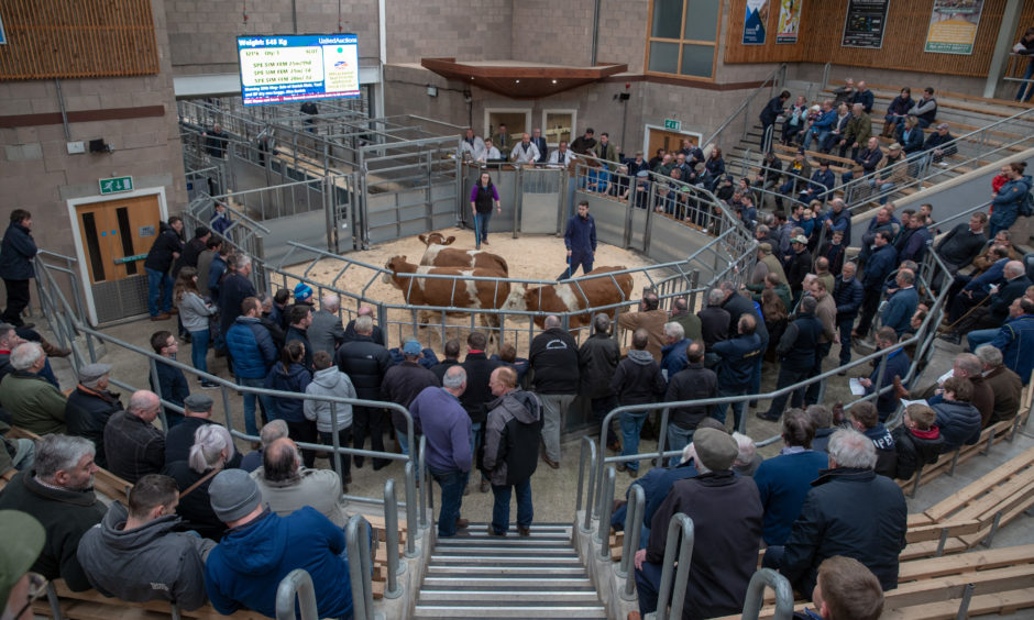 The crowd at the Stirling Bull sales.