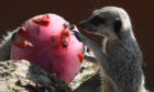 Meerkats enjoy the sunshine.