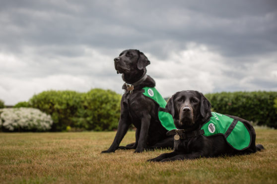 Some of the assistance dogs offered to people with dementia.