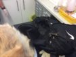 The dead German Shepherd dog found bound and injured on beach.