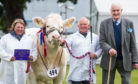 Tracey Nicoll, Davie Nicoll and Major David Walter with the Royal Highland Show beef interbreed champion.