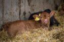 The demands include simplification of the Beef Efficiency Scheme.
