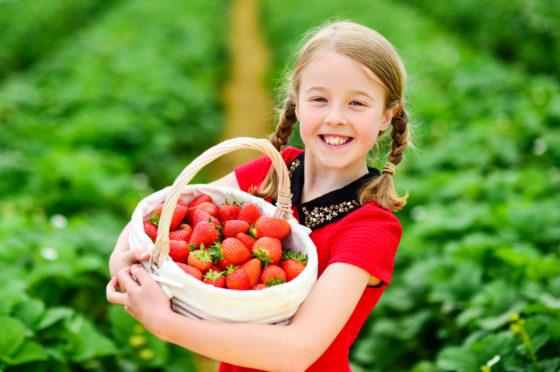 Carys Melton, 9, from Edinburgh, enjoys strawberry picking at Bruce Farm, Meigle.